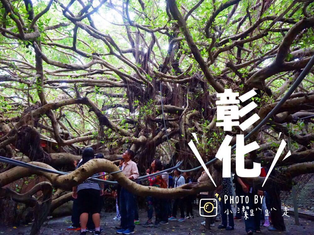 彰化景點推薦》哇~真的有會走路的榕樹!竹塘九龍大榕公-獨木成林奇觀.全國第一榕樹王.樹齡達400多歲