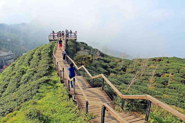 南投景點》南投大崙山觀光茶園+銀杏森林,太美了!走在台灣腳下這片土地,真得好美不可思議!